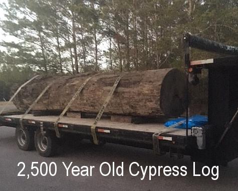 2,500 year old Cypress Log